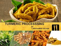 cuisine curcuma turmeric processing 1 638 jpg cb 1466149227