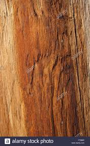 wood texture of warm orange color stock photo royalty free image