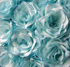 turquoise roses turquoise roses search on we heart it