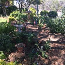 australian native plants for rock gardens video and photos gardens of the downs home facebook