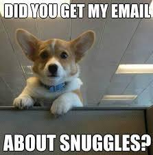 did you get my email dog talk pinterest corgis corgi and animal