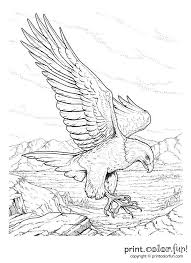 Best 25 Memorial Day Coloring Pages Ideas On Pinterest American Free Easy To Print Coloring Pages