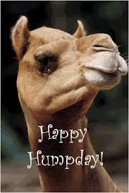 Camel Memes - camel hump day pics images lovely images hump day camel memes