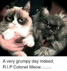 Colonel Meow Memes - 25 best memes about colonel meow colonel meow memes