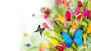 pictures of butterflies on flowers