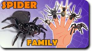 spider finger family halloween monster funny song animals bugs