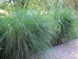 Tall Grass Landscaping by Let Your Grass Grow Huffpost