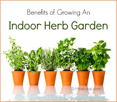 inside herb garden indoor herb garden 5 reasons you should be growing herbs indoors