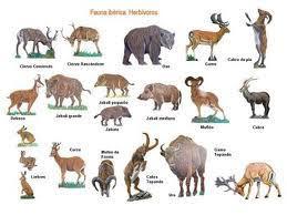 imagenes de animales carnivoros para imprimir animales animales carnivoros es hervivoros homnivoros science