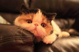 top 30 most cutest baby cat pictures cutest cats