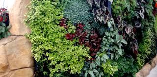 vertical gardening gets real your easy garden