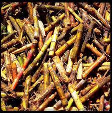 17 best sugar cane images on pinterest sugar traveling and beverage