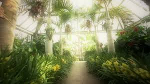 the orchid show returns youtube