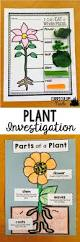 best 25 flower parts ideas on pinterest parts of a flower