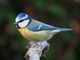 know your birdsong click through our quick guide to the calls of