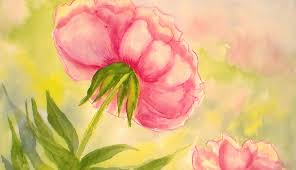 how to paint a peony flower in watercolors easy tutorial youtube