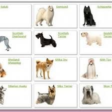 Types Of Dogs 13 Pictures Of The Type Of Dog Best For Home Dog Crystal Tiers