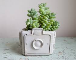 cute succulents 18 cute and unique planters for succulents huffpost