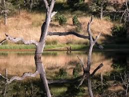 Henry Coe State Park Map by Henry W Coe State Park Perfect For Experts And Beginners