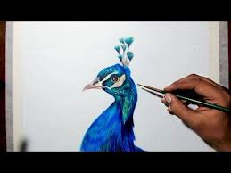 77 best peacock images on pinterest peacock art peacock and