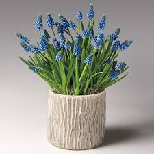 Fragrant Plants Florida Live Gift Plants Plant U0026 Flower Gifts That Just Grow In Beauty