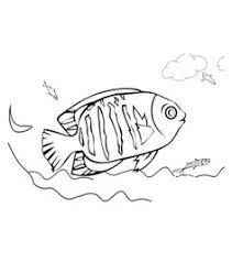 fish coloring pages 2 272334 definition wallpapers wallalay
