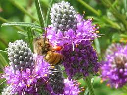 common purple garden flowers
