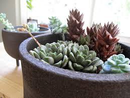 Best Houseplants Five Best Houseplants For Beginners Greg Tilley Modular Homes