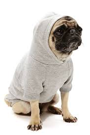 Sup Dog Hoo haha looks like ET course both pugs and ET are