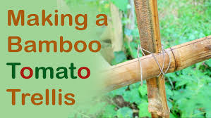 making a bamboo tomato trellis day 21 of 30 youtube