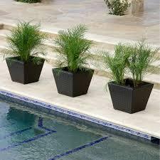 planters costco