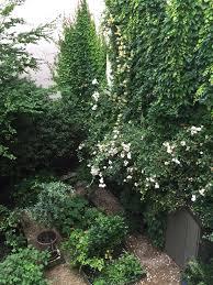 on the street 10 garden ideas to steal from paris gardenista