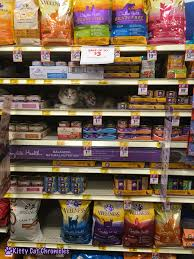 cat product reviews archives kitty cat chronicles