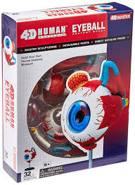 amazon com tedco human anatomy eyeball anatomy model toys u0026 games