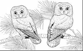 unbelievable hard owl coloring pages printable with hard coloring