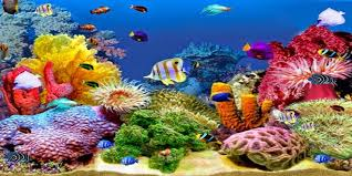 india s ornamental fish tech park to come up in chennai