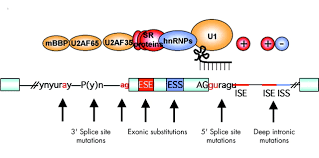 splicing in action assessing disease causing sequence changes