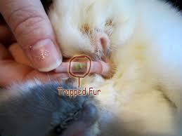 hair ring hair rings