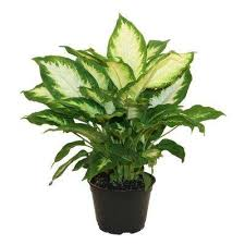 indoor plants garden plants u0026 flowers the home depot