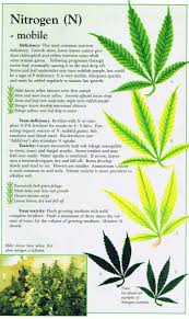 leaf discoloration u2026 stuff pinterest cannabis leaves and