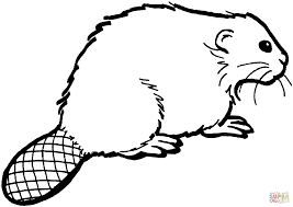 beaver 11 coloring page free printable coloring pages