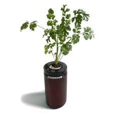 cilantro sprigli indoor herb garden kit and growing guide