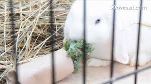 Rabbit Hutch Set Up How To Set Up Rabbit Hutches U0026 Cages Small Pets Youtube