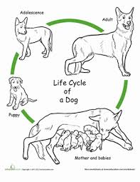 color cycle dog worksheet education