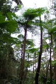 Native Plants In The Tropical Rainforest New Caledonia Rain Forests Wikipedia