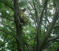 climbing trees al kavadlo