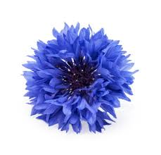 edible blue flowers edible flowers to top your favorite treats proflowers