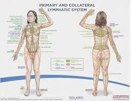 Diagram Of Knee Anatomy Best 25 Body Diagram Ideas On Pinterest Anatomy Of The Body