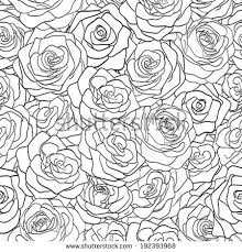 rose line drawing stock images royalty free images u0026 vectors