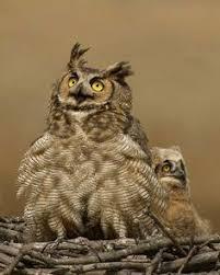 24 best horned owl tattoo on paper images on pinterest
